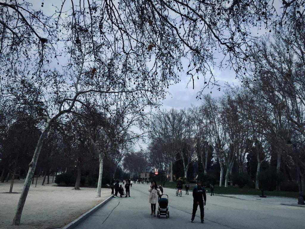 Retiro park madrid January  dreams