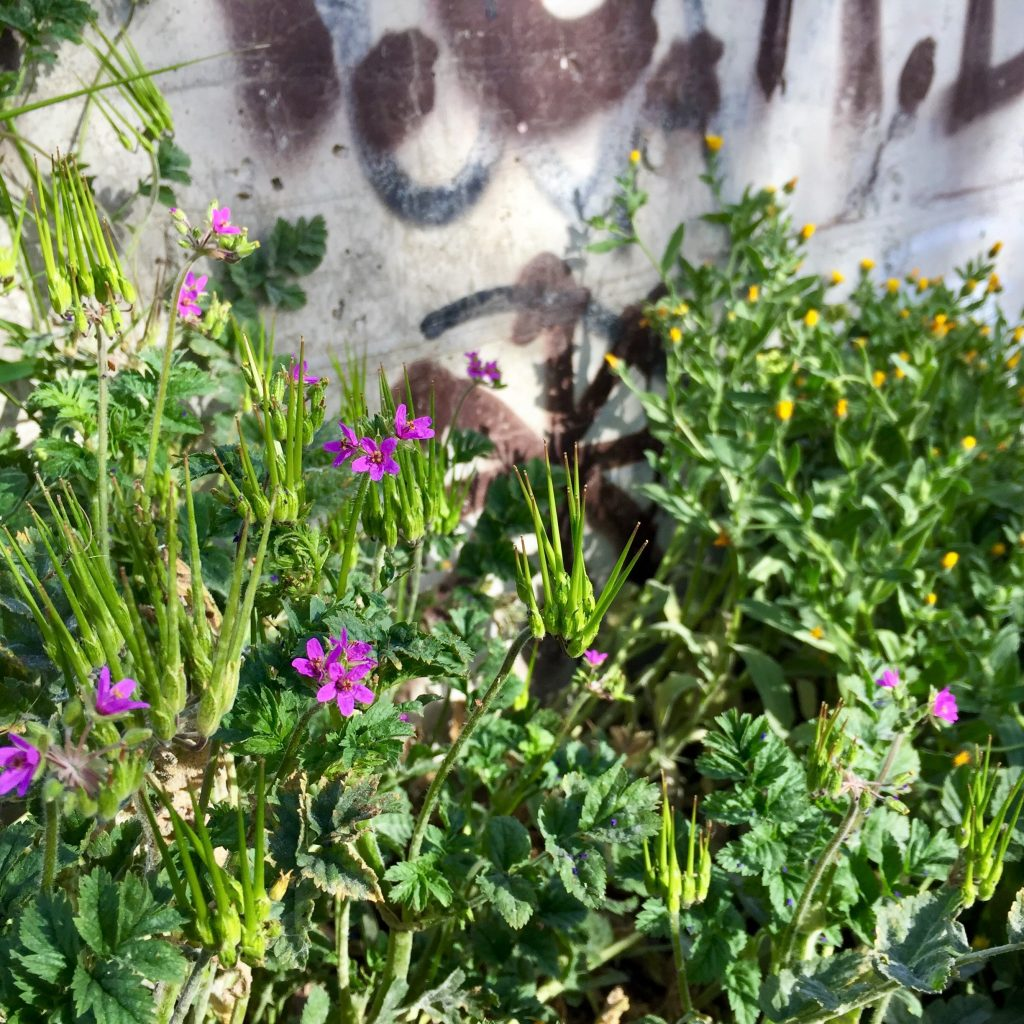 dancing flowers wild nature