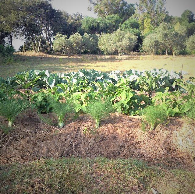 synergy gardening