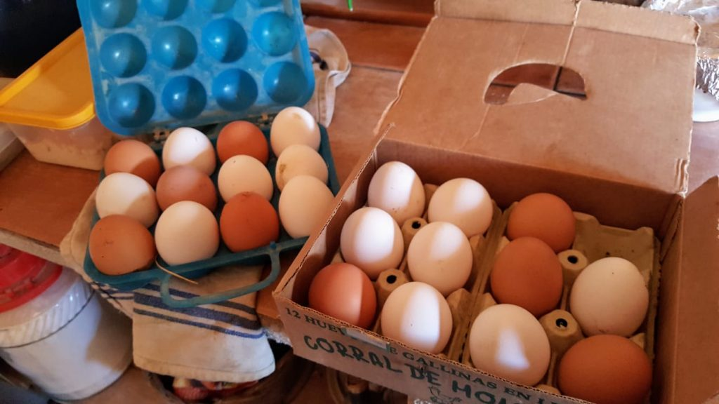 Freedom Farm eggs