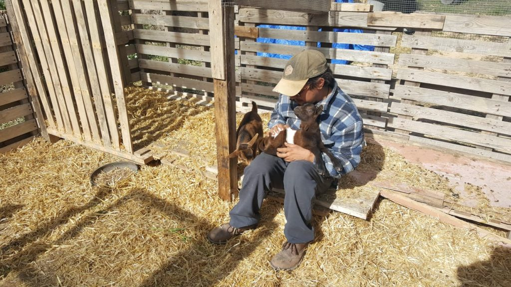 Freedom Farm goats