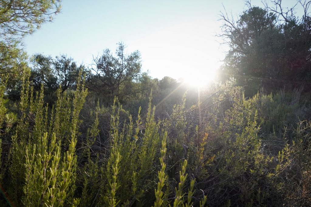 off-grid rewilding Spain
