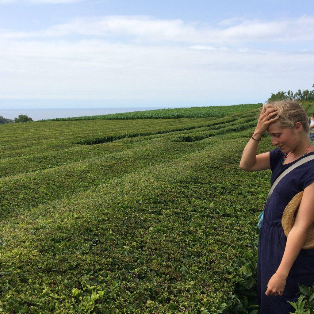 Tea plantations The Azores