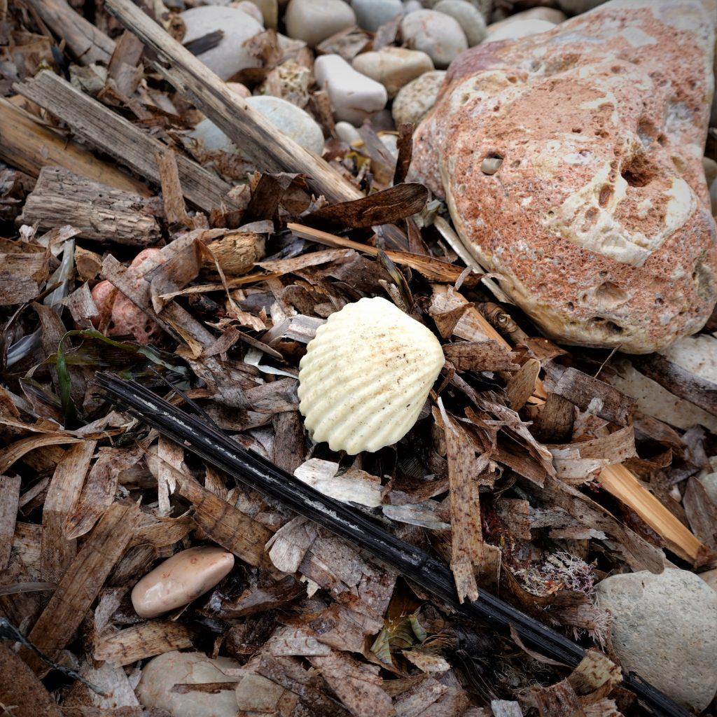 fake sea shell