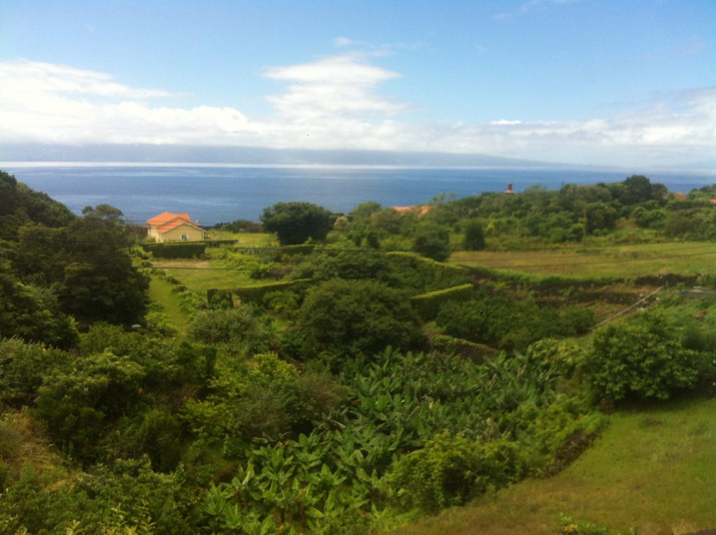 Synchronicity in the Azores