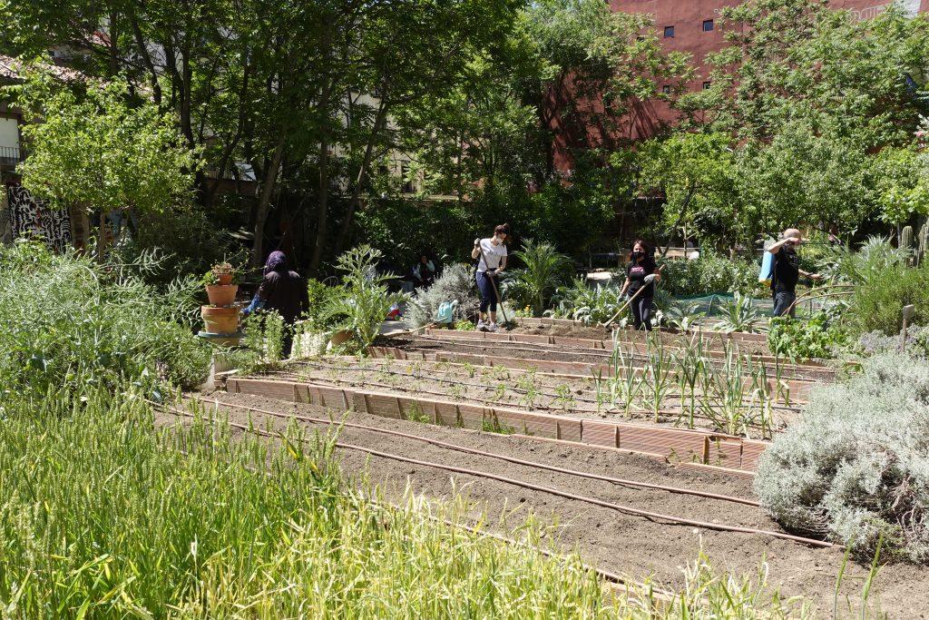 urban gardening community garden