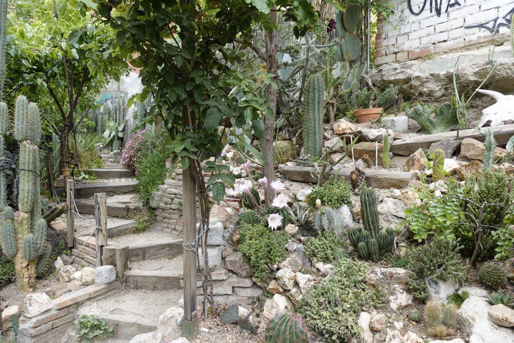 cactus garden Esta es Una Plaza