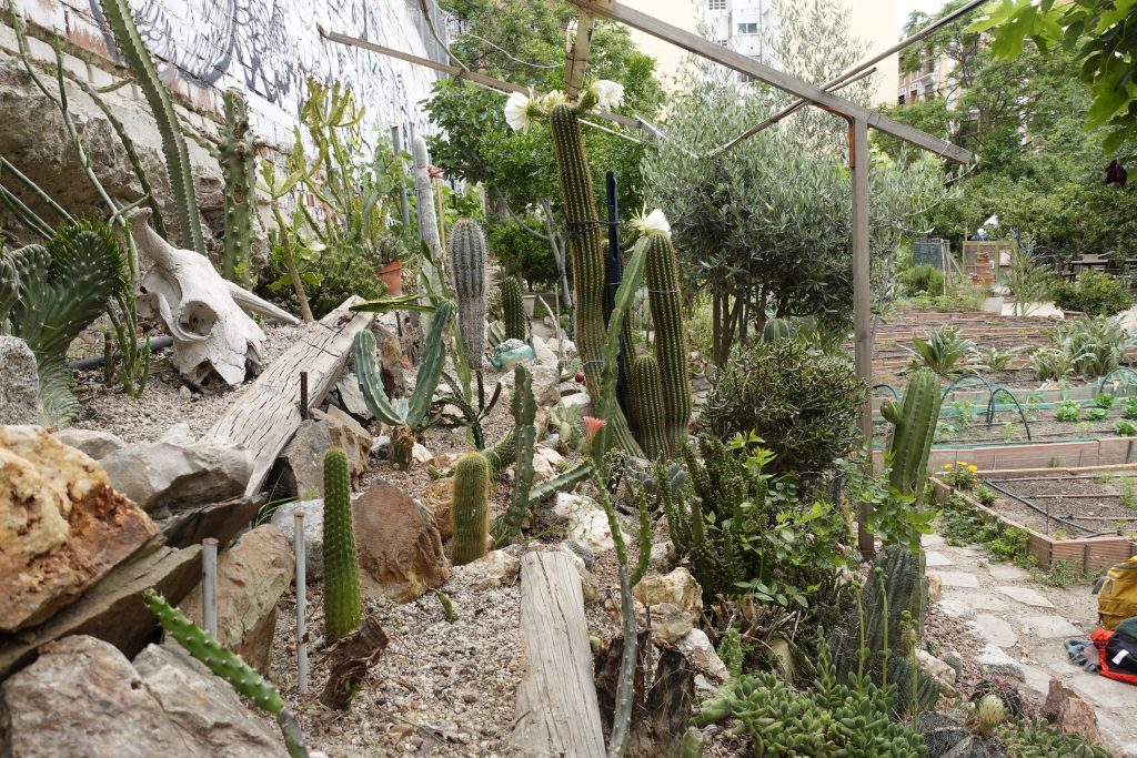 cactus garden in ¡Esta es Una Plaza!