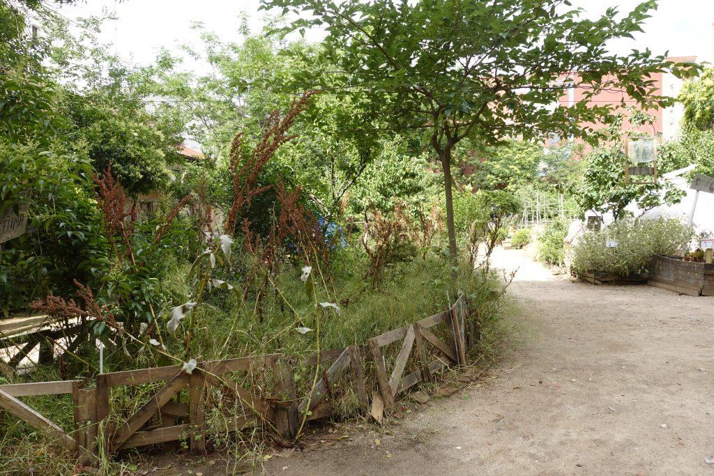 Wild garden ¡Esta es Una Plaza!