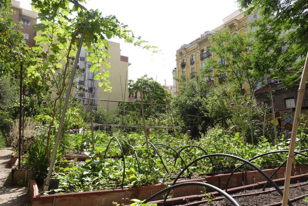 Comunity garden ¡Esta es Una Plaza!